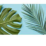 Palm leaf, Leaf, Monstera