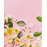 Petals, Flower arrangements