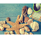 Holiday & Travel, Beach, Mussel, Starfish, Maritim