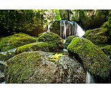Nature, Waterfall, Forest