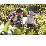 Father, Son, Harvesting, Vegetable Garden