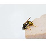 Food, Wasp