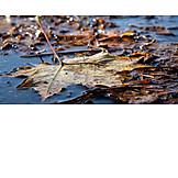 Autumn, Leaf, Leaves, Weather, Puddle