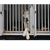 Sled dog, Cage