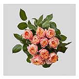 Roses, Rose Bouquet