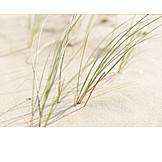 Backgrounds, Wellness & Relax, Beach, Dunes, Marram Grass
