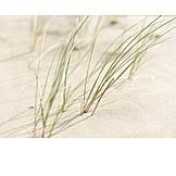 Backgrounds, Wellness & Relax, Beach, Dunes, Marram Grass