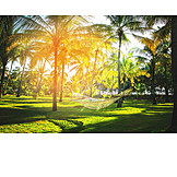 Relaxation & Recreation, Palm, Sunny, Palm Garden, Hammock