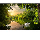 Nature, Lake, Swan, Enchanted