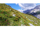 Spring, Rhododendron, Mountain meadow, Karwendel mountains