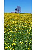 Spring meadow, Bad tölz