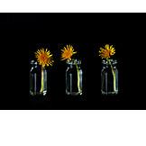 Dandelion, Vase