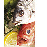 Prepared Fish, Marbled Rockcod, Orange Roughy