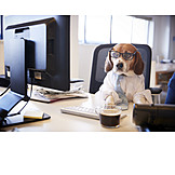 Office, Typing, Beagle