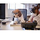 Arbeitsplatz, Bulldogge, Kollegen, Beagle