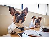 Meeting, Geschäftsbesprechung, Bulldogge