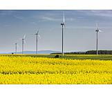 Rapsfeld, Alternative Energien, Windräder