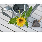 Sunflower, Watering Can