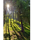 Forest, Trees, Tree Shadow