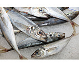 Sardines, Prepared Fish