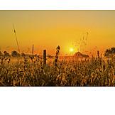 Sunset, Meadow