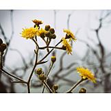 Flower, Morning Dew