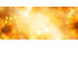 Sunflower, Lights, Golden