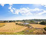 Agriculture, Arable land, Apulia
