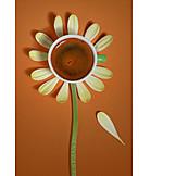 Flower, Coffee, Petal