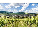 Wine, Leiwen