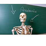 Science, Skeleton, Anatomy