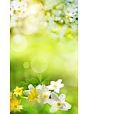 Sonnenlicht, Frühling, Obstblüte