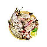 Fish, Carp, Raw