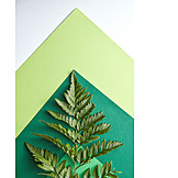 Green, Fern, Sheets of paper