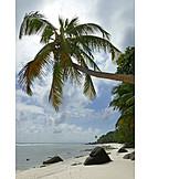 Palm, Sandy