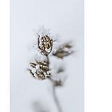 Winter, Plant, Cold, Snow