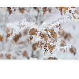 Winter, Rime, Ice Crystal