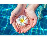 Blossom, Hand, Pool