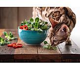 Cat, Foraging, Salad Bowl