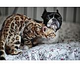 Cat, Dog, Friends, Cuddle, Boston Terrier