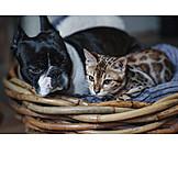 Cat, Dog, Friends