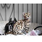 Katze, Hund, Freunde