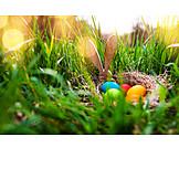 Easter, Easter Bunny, Egg Hunt