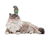 Katze, Papagei