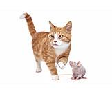 Katze, Ratte