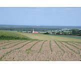 Arable, Agriculture, Corn Field