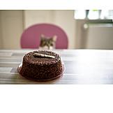 Cat, Watching, Cake