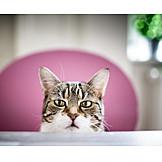 Katze, Neugierig