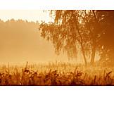 Natur, Morgendämmerung, Dunst