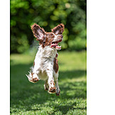 Hund, Luftsprung